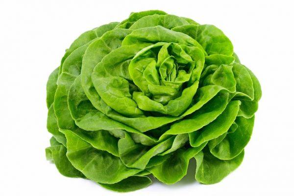 Agro-Neretva Salata Putarica