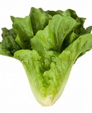 agroneretva-salata romana