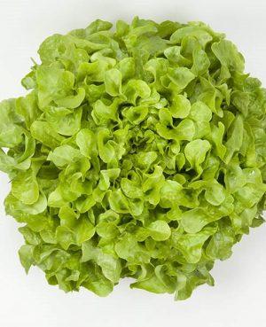 agroneretva - hrastov list