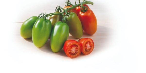 agro-neretva rajčica napika F1